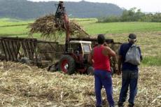 Alzando caña cortada en Cuba. (EFE)